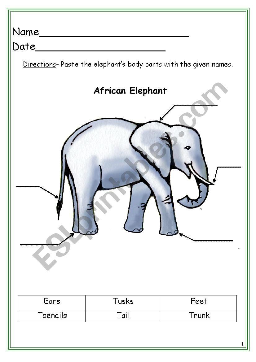 Elephant Labeling Worksheet