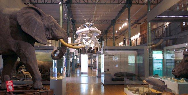 Museo Nacional de Ciencias Naturales. Madrid con niños, dragones y unicornios.
