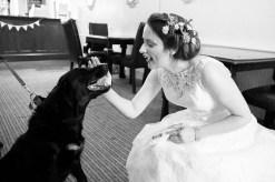 dog wedding somerford hall