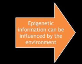 epigenetic modification