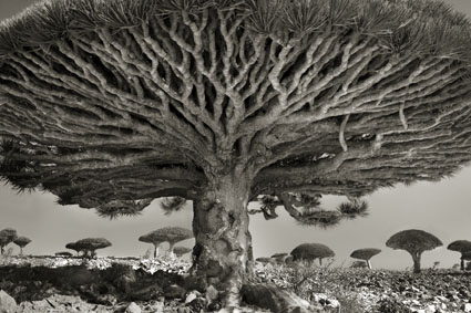 "Beth Moon, ""Heart of the Dragon"", 2010-2011. Courtesy l'artista e PH Neutro"