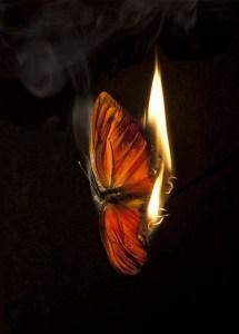 Mat Collishaw Burning Butterfly 4, 2013 fotografia C-type, 80x109cm