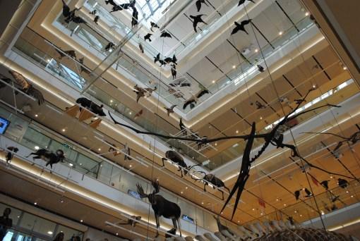 Inaugurazione del MUSE - Museo delle scienze, Trento, veduta allestimento interno. Foto: Albarello