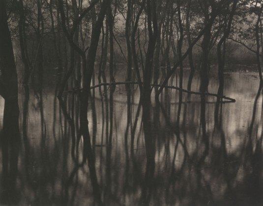 Takeshi Shikama, Silent Respiration of Forests I. Toyosawa Lake #1, 2009, platinum print on Gampi paper, Ed.9, cm 20.3x25.4