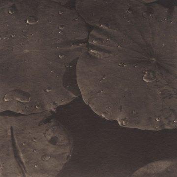 Takeshi Shikama, Evanescence. Lotus #15, 2005, platinum print on Gampi paper, Ed.15, cm 13.6x13.6