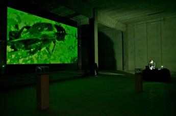 dolomiti contemporanee, konzert fur wohltemperierte grillen, Giovanni de Donà, foto alberto montresor_padiglione schiara, 2012