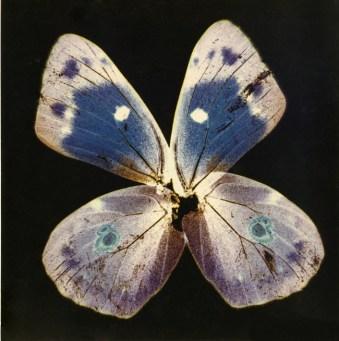 "Nino Migliori, da "" Herbarium"", 1974, C-print"