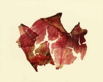 Nino Migliori, da Herbarium, 1974, C-print Vintage 01