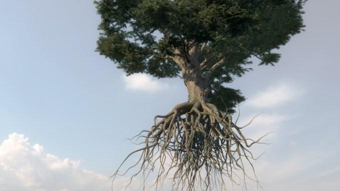 l cedro dei cieli 2014 Still da videoanimazione 3d Courtesy dell'artista e Galleria Passaggi, Pisa