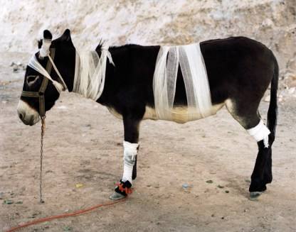 Servet Kocyigit, Mountain Zebra, 2008 c-print, 95x120 cm edition of 5
