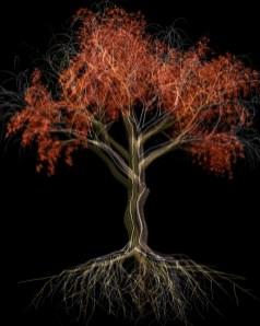 Davide Coltro, Tree B 01
