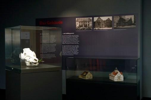 Chiara Lecca. Quod Paret, veduta della mostra, Naturkundemuseum im Ottoneum, Kassel Foto Werner Maschmann (Garden, suino)