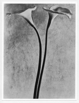Tina Modotti. La nuova rosa. Arte, storia, nuova umanità, Casa Cavazzini. Museo d'Arte Moderna e Contemporanea, Udine