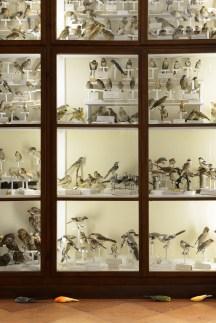 Vanessa Safavi Each Color is a Gift for You, 2012, Installazione con 17 uccelli in tassidermia, dimensioni variabili Veduta Accademia dei Fisiocritici, Siena Courtesy AGIVERONA, Galerie Chert, Berlin PH. Michele Alberto Sereni