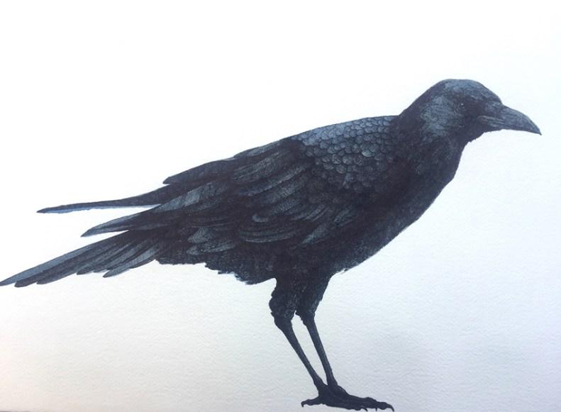 Vanni Cuoghi, Corvo, 2017, acquerello e china su carta, 70 x 100 cm