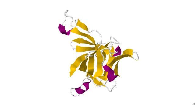 """alt=""""O papel das interleucinas na atividade das espondilartrites"""""""