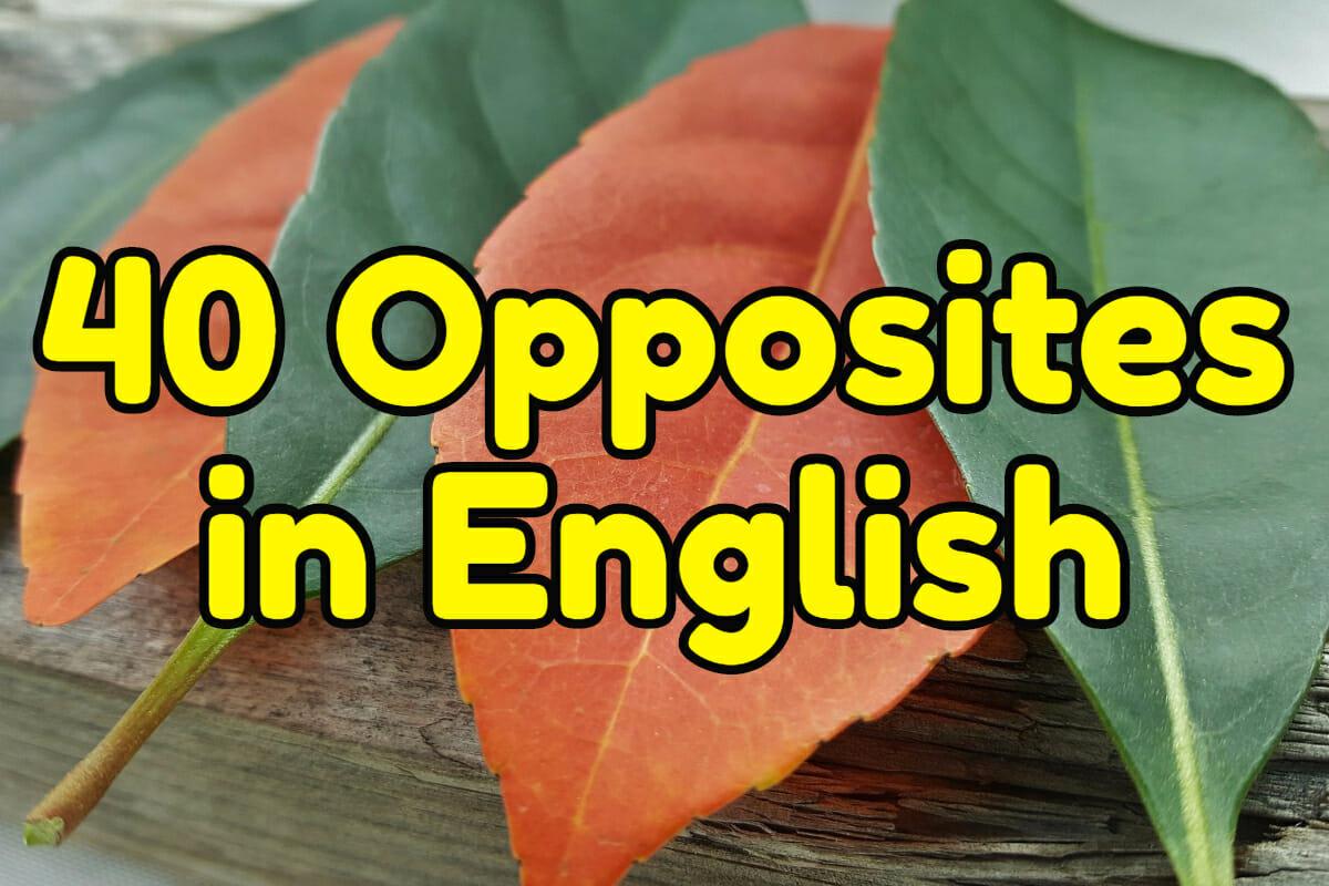 40 Common Opposites In English Espresso English