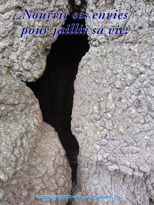 nourrir-ses-envies-pour-jaillir-sa-vie-3-decembre-2016