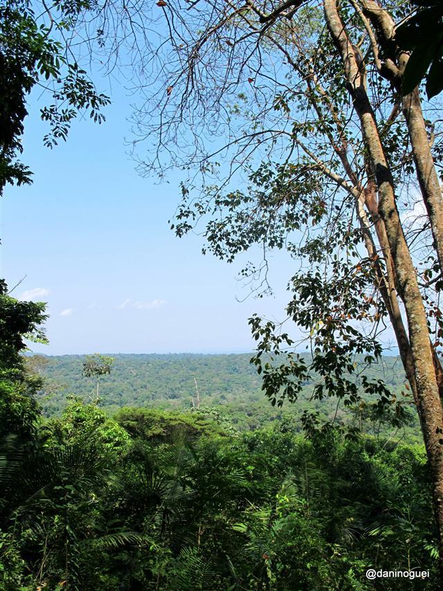 Alter do Chão: Mirante da FLONA - a floresta amazônica aos seus pés