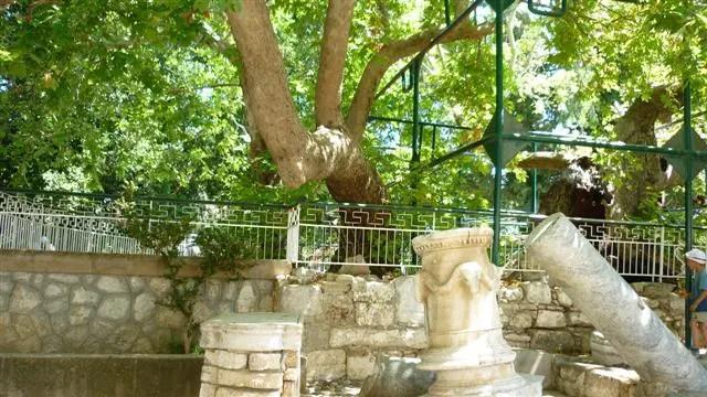 Árvore de Hipócrates - Kos, Grécia (Foto: Esse Mundo É Nosso)