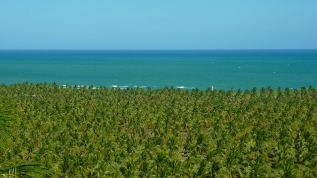 Praias de Maceió, Praia do Gunga (Foto: Esse Mundo É Nosso)