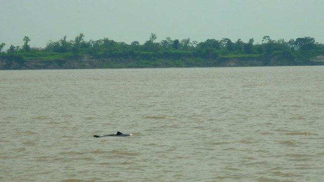 Encontro das águas em Manaus (Foto: Esse Mundo É Nosso)