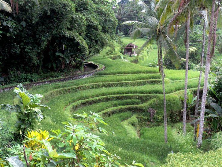 Ubud, a Bali de Julia Roberts em Comer, Rezar e Amar (Foto: Esse Mundo É Nosso)