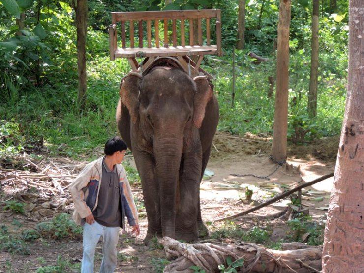 Andar de elefante no Laos (Foto: Esse Mundo É Nosso)
