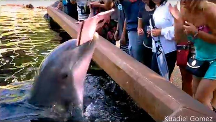 Golfinho pega talbet de visitante (Foto: Reprodução/YouTube)
