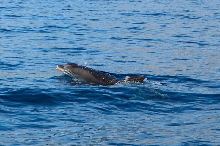 Passeio de barco na Ilha da Madeira (Foto: Esse Mundo é Nosso)