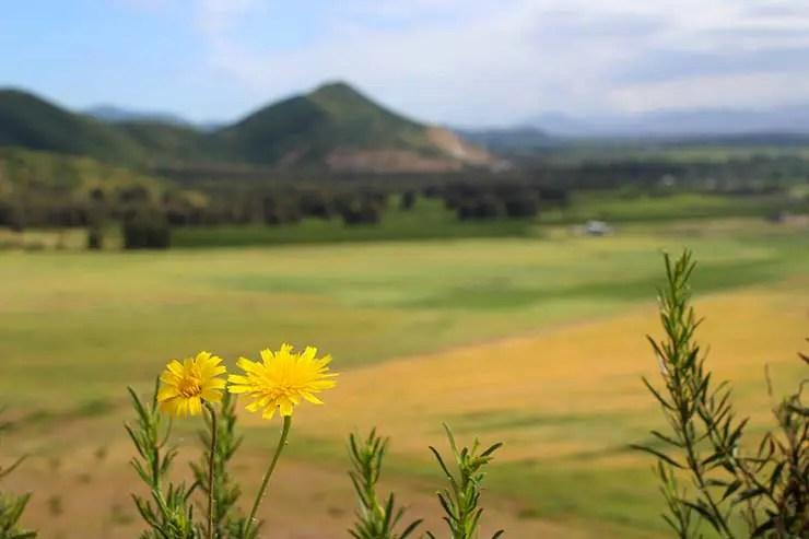 Vinícolas do Valle de Colchagua, Chile (Foto: Esse Mundo É Nosso)