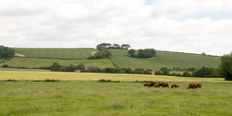 Wolds view outside Tetford