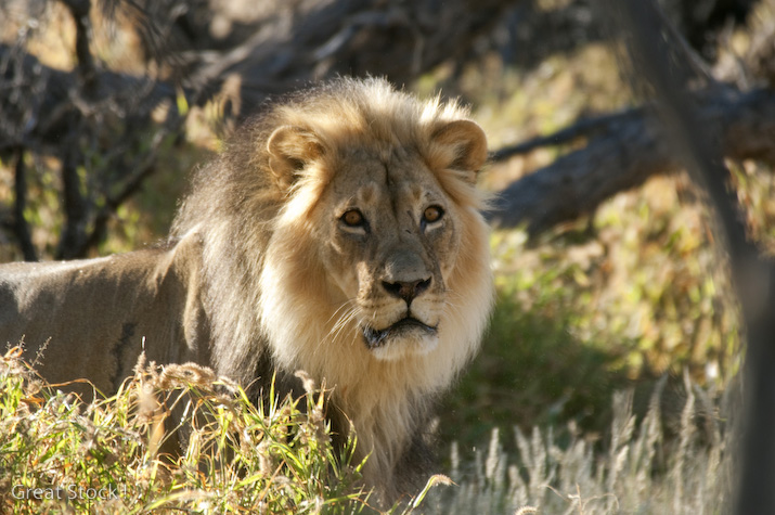 Discover South Africa's wilder side with Acacia Africa