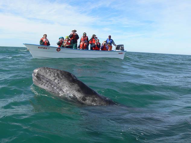Explore Baja California's marine life with Naturetrek
