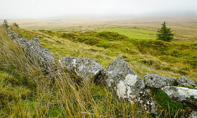 Dartmoor's fogs, bogs and the family dog