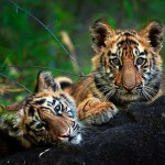 Pugdundee to launch Waghoba Eco Lodge in Tadoba