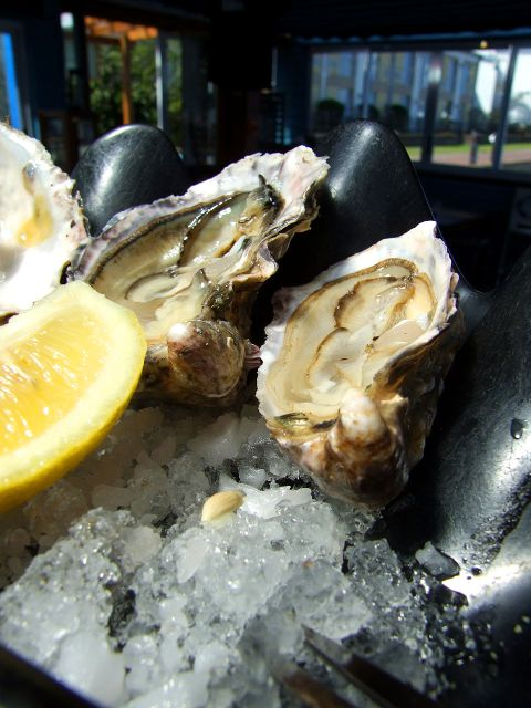 Oysters © hamper   Morguefile.com