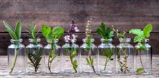 Bottle of essential oil with herbs holy basil flower basil flower rosemary oregano sage parsley thyme and mint set up on old wooden background .