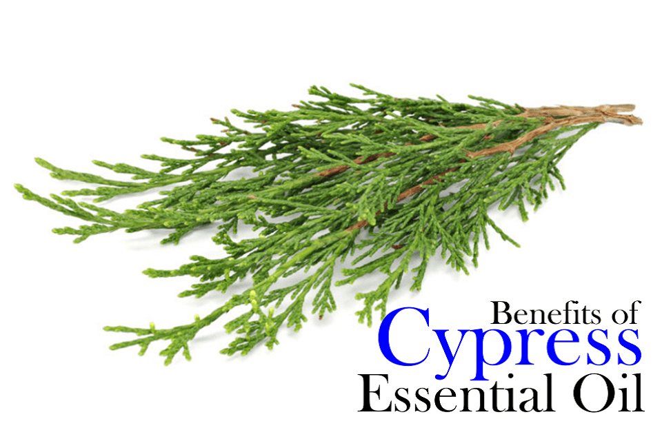 Benefits of cypress essential oil