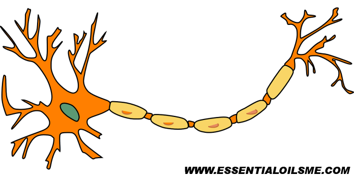 Top 5 Useful Essential Oils For Nerve Pain