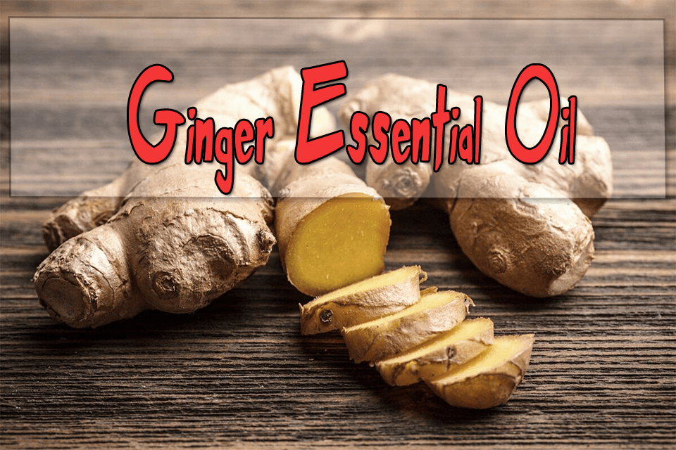 Ginger Essential Oils for Aromatherapy