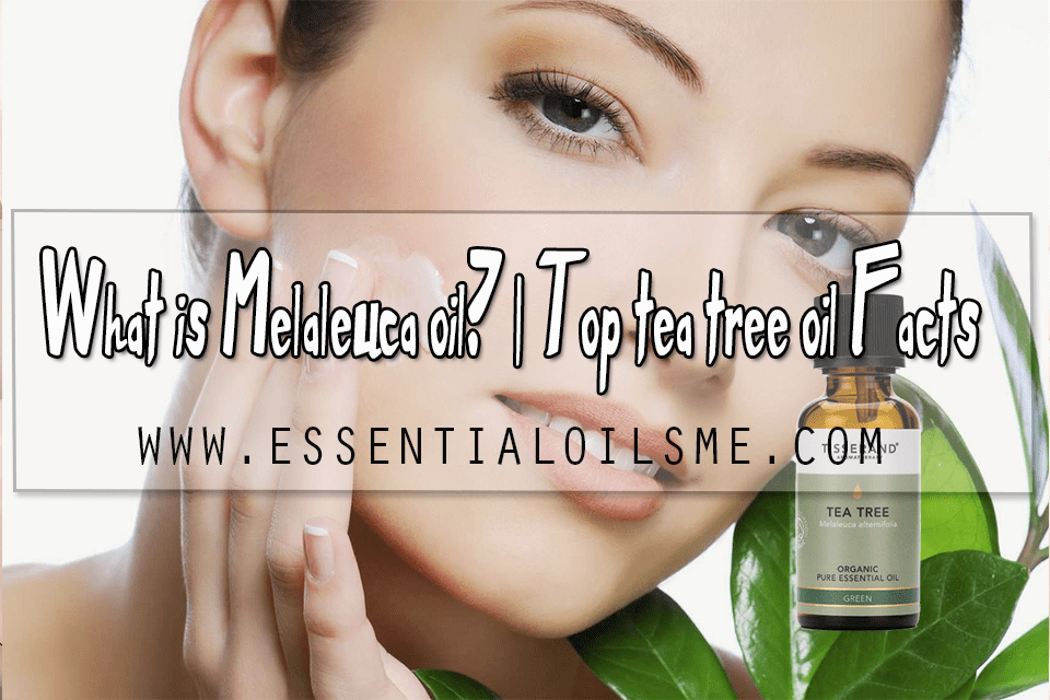 What is Melaleuca oil