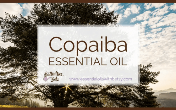 doTERRA Copaiba Essential Oil doTERRA Copaiba essential oil is one of our new oils from doTERRA. It was introduced at the2017 doTERRA convention. We have a wonderful lineup of new oils coming to doTERRA. ButdoTERRA Copaiba Oil really tops it off. Copaiba is the oil I'm most excited to try. Read this post to learn how to use doTERRA Copaiba oil. Find out where to buy Copaiba essential oil. I'm very excited about the addition of doTERRA Copaiba essential oil for several reasons! How Can I Use Copaiba Essential Oil?