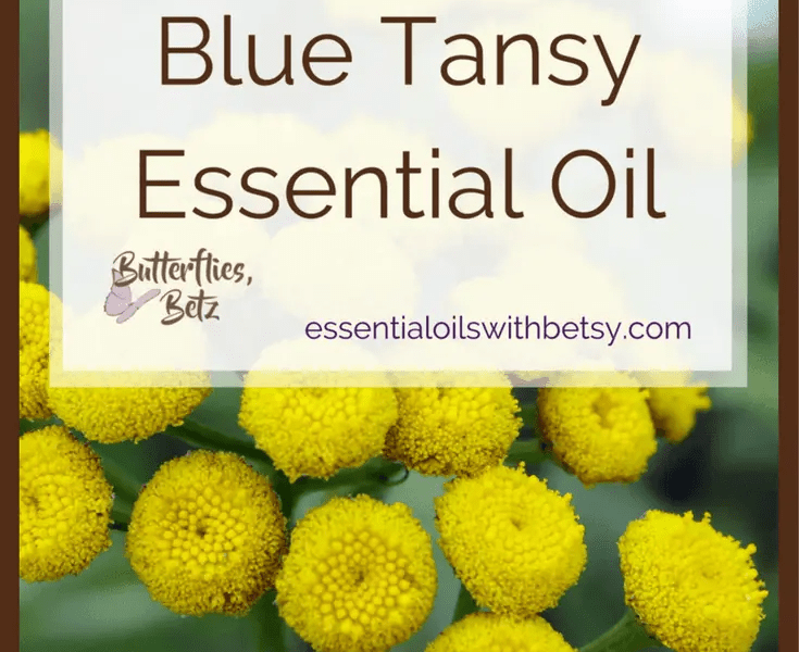 doTERRA Blue Tansy Essential Oil doTERRA Blue Tansy Oil is coming to doTERRA!  At the 2107 doTERRA convention,  Dr.  Hill announced that we will now carry doTERRA Blue Tansy Essential Oil.  Blue Tansy oil is an exciting addition to our essential oil arsenal!  Continue reading to learn about using Blue Tansy essential oil. TIP:  You can read a list of all new doTERRA oils in 2017 HERE. doTERRA Blue Tansy Essential Oil Benefits