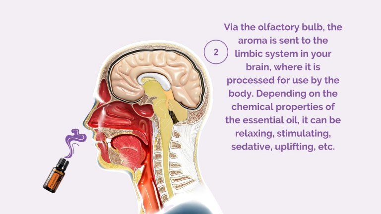 What are essential oils: Science of aroma