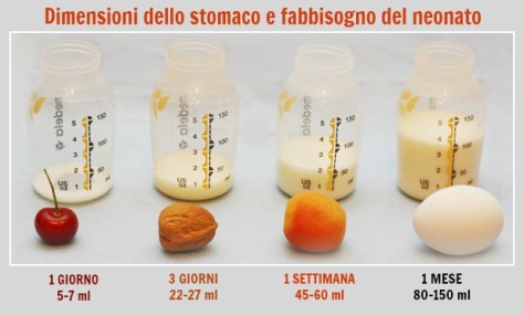 dimensioni-stomaco-e-fabbisogno-neonato