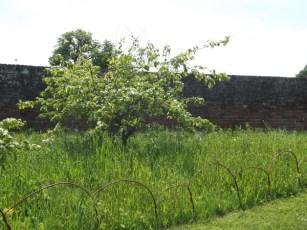Cressing Temple Walled Garden 2015 (5)