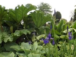 Beth Chatto Gardens (18)