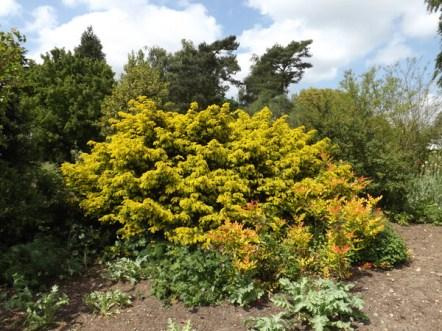 Beth Chatto Gardens (30)