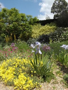 Beth Chatto Gardens (6)